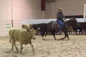 635921089040786456 cutting horse