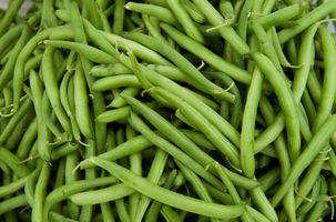 635794829063434219 green beans