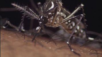 635894341861315449 zika mosquito