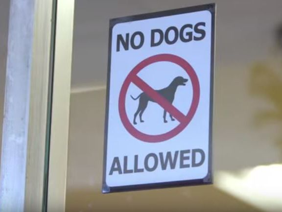 635905453844135354-NO-DOGS-ALLOWED.JPG