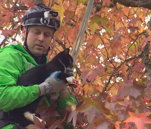 hundreds of rescues prove canopy cat rescue is the