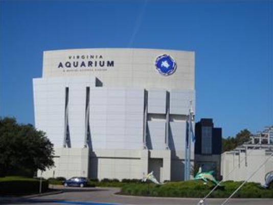 Virginia Aquarium Looking For Volunteers